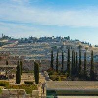 Иерусалим. Вид из Старого Города на Масличную гору. :: Игорь Герман