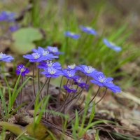 На лесной поляне :: Светлана