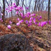 Ну вот и Весна... :: Dmitriy Strogalin