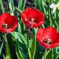 Весенние цветы :: Любовь Потеряхина