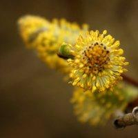 весна :: раф