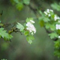 В лесу после дождя :: Полина Дюкарева