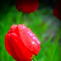 Символ весны. :: Виктор Малород