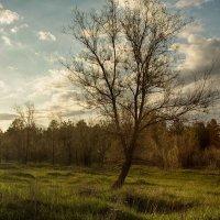 Закат и дерево :: Dmitriy Predybailo