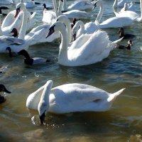 Лебединое озеро. Крым . Евпатория :: elena manas