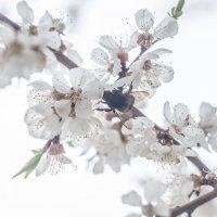 Flower_85 :: Trage
