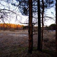 лесной закат :: Виталий Житков