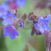 Цветы весны.... :: игорь козельцев