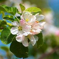 Весна пришла! :: Владимир Богославцев(ua6hvk)