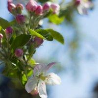 весна-красна :: Екатерина Исаченко