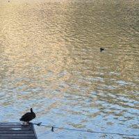Утки на озере в Гальштаде, Австрия :: Ирина