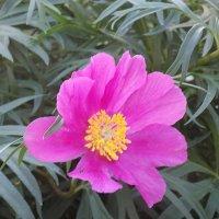 Цветок :: Максим Мальцев