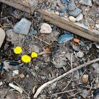 Весна :: Andrew B.
