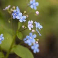 Flower_83 :: Trage