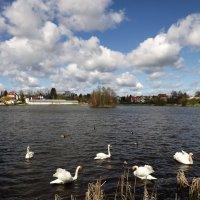 Лебединое Озеро.. :: Эдвард Фогель
