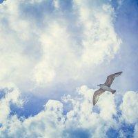 Наслаждение полетом :: Виктория Коломиец