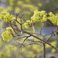 А в сердце не смолкнет свирель:Весна опять возвратится../Саша Чёрный/ :: Alexey YakovLev