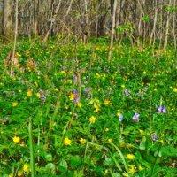 лесные цветы весной :: Михаил Николаев