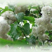 Весеннее утро... :: Тамара (st.tamara)