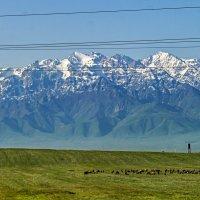 Горы Киргизского Ала Тоо :: Дмитрий Потапкин