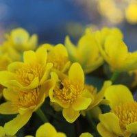 первые цветы :: татьяна