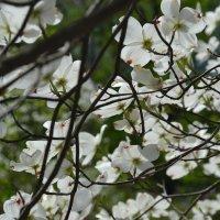 Цветочное дерево :: Анитушка Мокеева