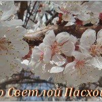 Пусть  ваши души искрятся верой, помыслы - добром, а сердце - любовью :: Нина Корешкова