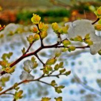 ..... :: Фотогруппа Весна.