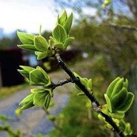 Весна на дачах :: Юрий