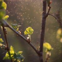 Холодная весна в Калязине :: Эльмира Суворова