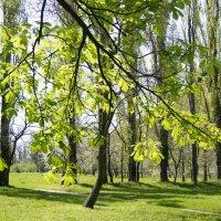 Молодо-зелено :: Виктория Попова