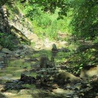 Лесной ручей :: Дарья