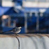 городская птичка :: Натали Акшинцева