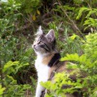 Задумчивый кот :: Полина