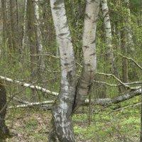 Юдинский лес :: Наиля