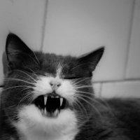 Не будите в котейках ненастного зверя… :: Алексей (АСкет) Степанов