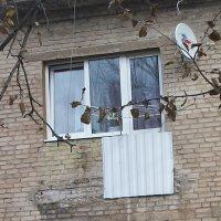 """Балкон """"Забудь!"""" :: Галина Бобкина"""