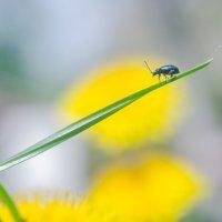 А я иду, шагаю по траве... :: Андрей Афанасьев