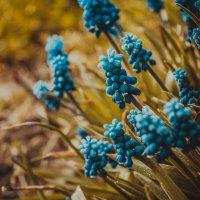 Весна :: Павел Кандауров