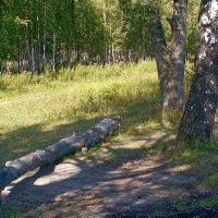Тропинка в лесу :: Вера Щукина