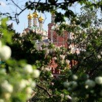ах,весна,ах,месяц май :: Олег Лукьянов