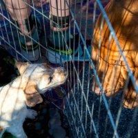 На распродаже щенков :: MVMarina