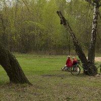 Весна в парке :: Владимир