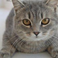 Cat :: Екатерина Малова