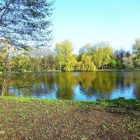 Утром на озере в парке :: Маргарита Батырева