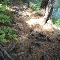 Сплетение корней :: Надежда Малинкина