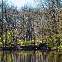 Весна пришла 3 :: Виталий