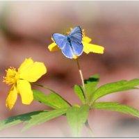 Голубое на желтом... :: Вячеслав Минаев
