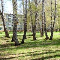 Солнечный денёк в городе. :: Мила Бовкун
