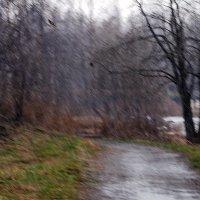 Снег с дождем. :: Лазарева Оксана